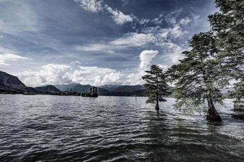 Lake Lago See Bäume