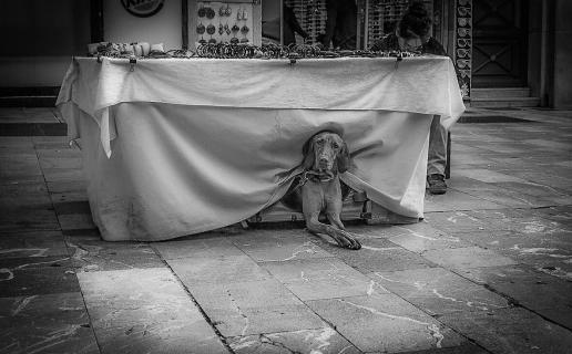 Hund als Model