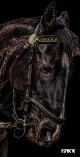 Kutschen-Pferd
