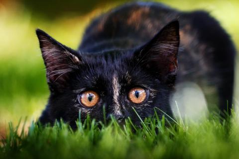 Jäger im Gras