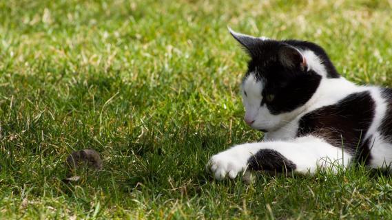 Maus & Katz