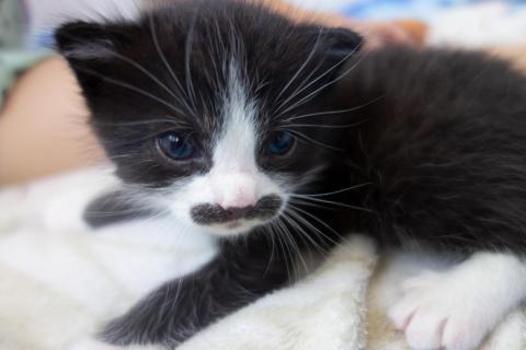 Schnurrbart Katze