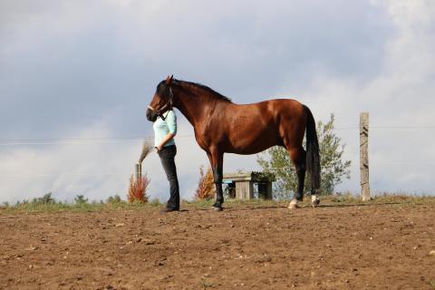 Pferdeansichten