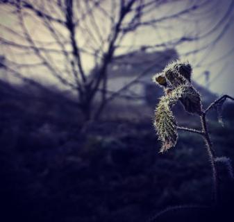 52 FOTOGRAFIEREN SIE EIN-WINTERBILD!_Joachim_Eitzenberger
