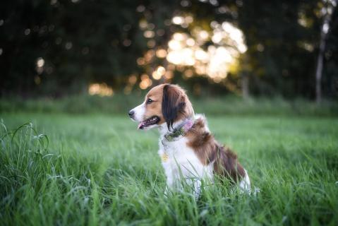 Hunde-Sommertraum