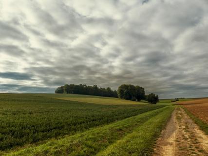 Perspektiven2 josef_reischhofer