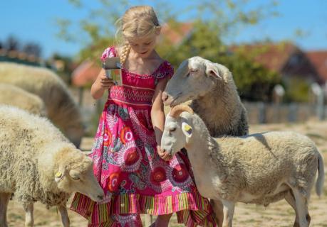 Kathi und die Schafe