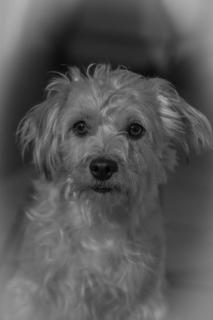 Lino The Dog