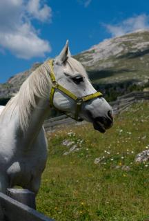 Pferdeportrait in den Dolomiten