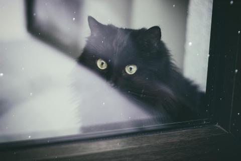 Katze hinter dem Fenster