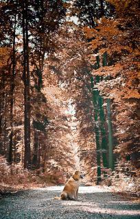 Hund im Einklang mit dem Herbstwald
