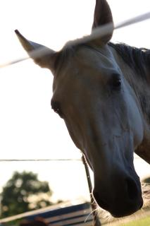 Hello Horse.