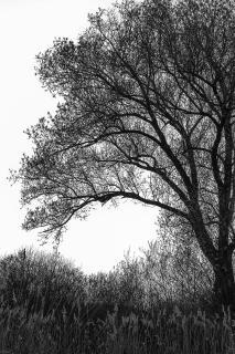 Baum bei Gegenlicht