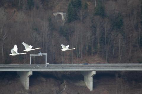 Flugbegleitung über der Autobahn