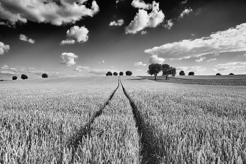 Rural landscapes - Tracks to heaven