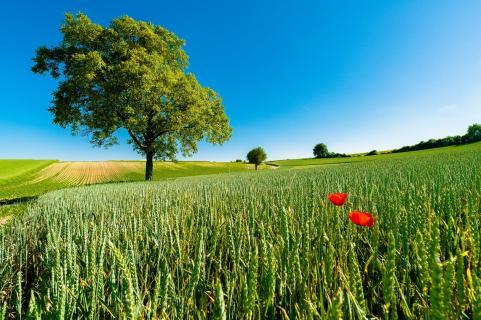 Rural landscapes - Summer's debut