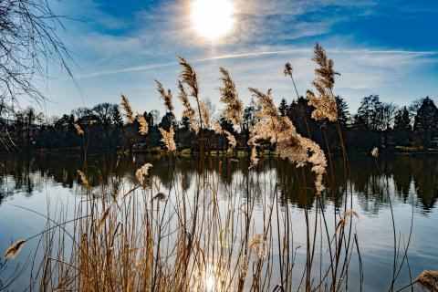 Der See im Frühling