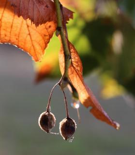 IMG 0152-52 Fotoaufgaben #40: Goldener Herbst_Grit_Franzke