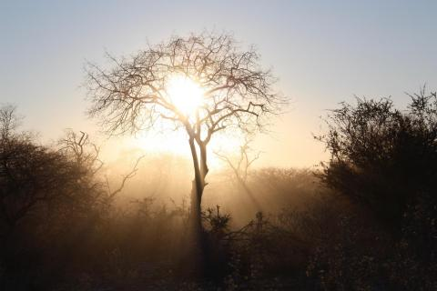 Morgensonne Etosha Nationalpark