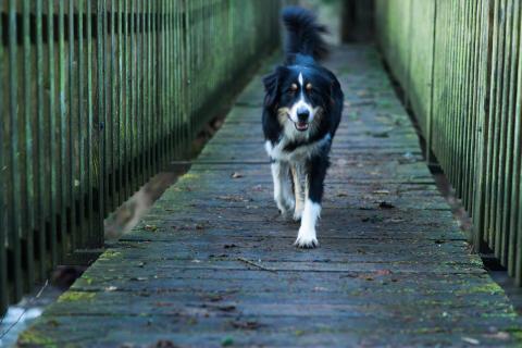12 Fotografieren Sie ein-Haustier_David_Hemetsberger