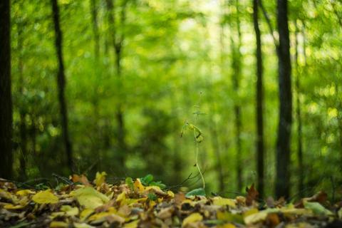 40 Bunter Blätterwald_David_Hemetsberger