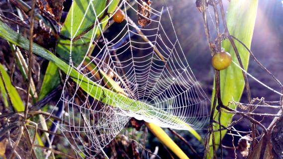 39 Herbst im Nebel Tonia Willumat