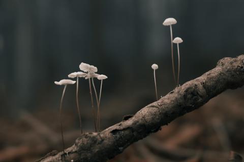 Pilze auf Ast