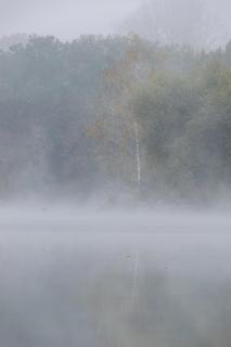 39_Herbst im Nebel_Christine Rueth