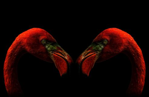 17 Flamingos_frank_hojenski_