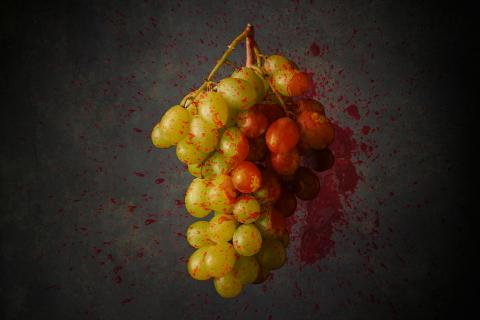 bloody grapes