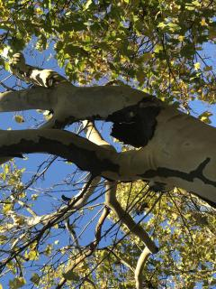 im Baum versteckte Figuren