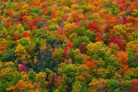 Herbst am Cabot Trail