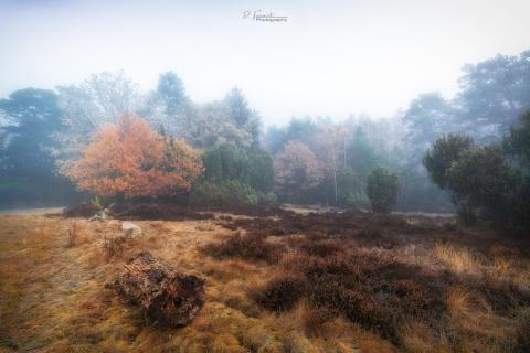 Herbststimmung in der Heidelandschaft