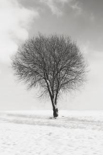 kontraste im winter