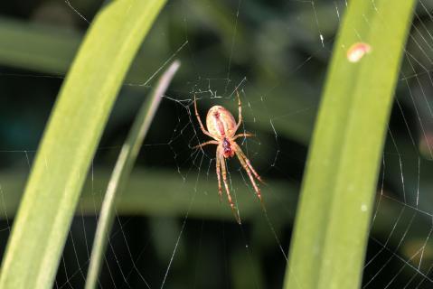 Spinne sitzt in ihrem Spinnennetz am Gartenteich