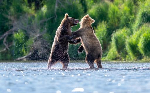 Wrestling Alaska Style