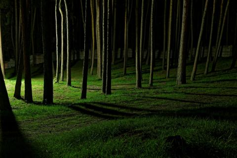 Nachts zu dritt im Wald