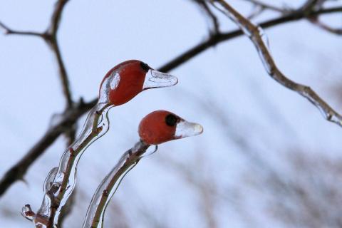 52 -Winterbild_Thomas_Schmalstieg