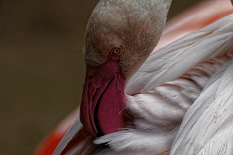 Warum gelten Flamingos eigentlich als schöne Tiere?