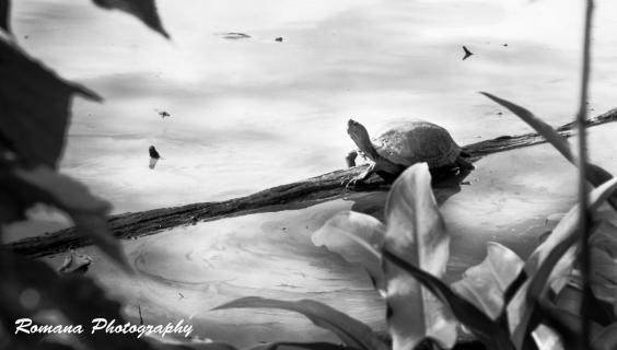 Schildkröte macht Pause