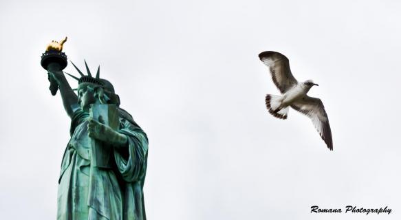 Statue of Liberty and Seagull - Freiheitsstatue und Möwe