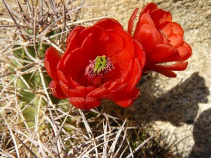 05 das Hauptmotiv hat-eine-farbe-rot_jana-thiem-eberitsch