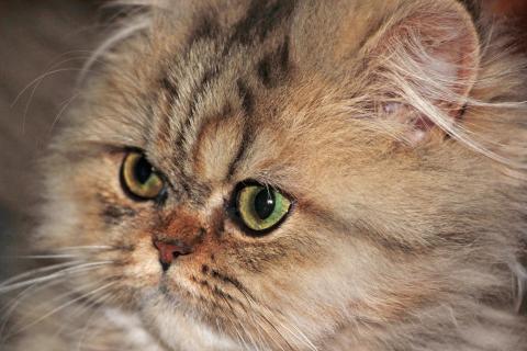 12 fotografieren Sie ein-Haustier_jana-thiem-eberitsch