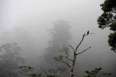 39 Herbst im Nebel_jana-thiem-eberitsch