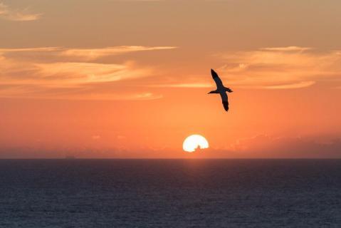 Wenn die Sonne in der Nordsee versinkt...