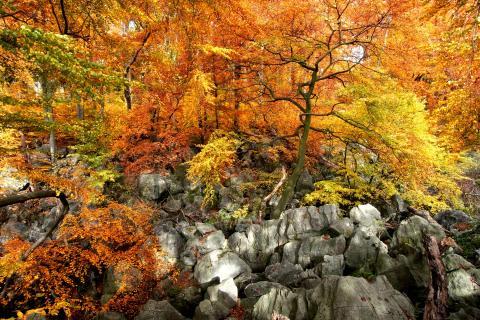40_Bunter Blätterwald_Manh Ngoc_Nguyen