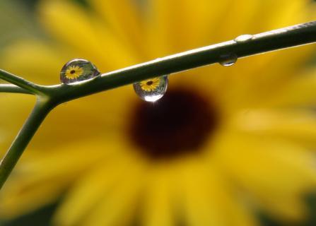 Blüte im Regentropfen