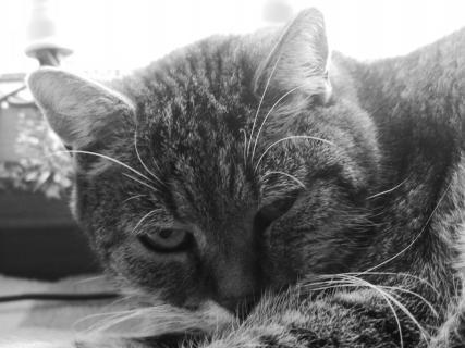 Katze Floppi