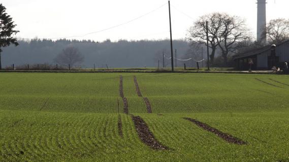 Bodenwellen im Feld