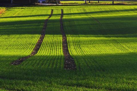 Spur im Feld